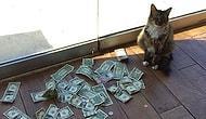 Кот Робин Гуд крадет деньги у незнакомцев, и они жертвуются бездомным
