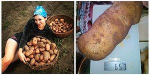 Ты бульбаш, я бульбаш! Белорусы копают картошку и фоткают процесс...