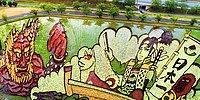 Японские фермеры изобрели новый вид искусства — гигантские картины из ростков риса на полях