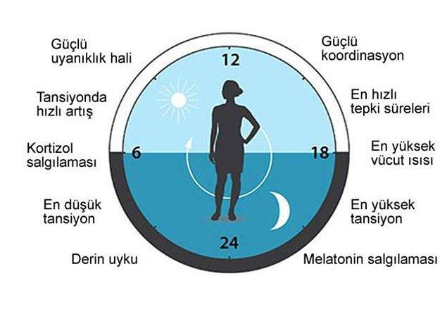 Bilim insanları, insanlar dahil tüm çok hücreli organizmaların hücrelerinde aynı ilkelere göre işleyen bir biyolojik saat olduğunu ortaya çıkardı.