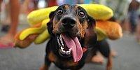 Подготовь своего питомца к Хеллоуину: Вкусные костюмы для собак
