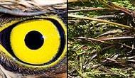Обнаружить всех замаскированных животных смогут лишь люди с глазом как у орла