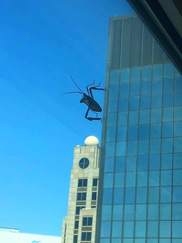 Dünyayı yok etmek için gelip, karşıdaki binadan buraya bakıyormuş gibi büyük görünen çekirge