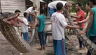 В Индонезии 7-метровый гигантский питон, напавший на человека, сам стал обедом деревенских жителей!