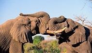 Fillerin Hortumları Ne İşe Yarar?