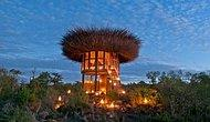 А не хотите ли переночевать в пятизвездочном гнезде? В Кении открылся необычный отель