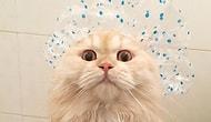 Встречайте новую звезду Instagram: кот Мипо, который обожает принимать душ