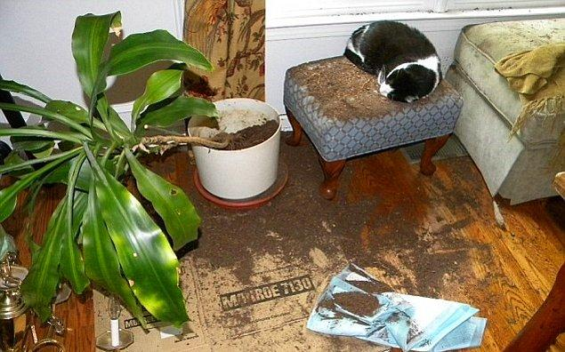 12. Evinizin sağında solunda kedinizin verdiği kalıcı hasarlarla her gün yüz yüze bakmıyor musunuz?