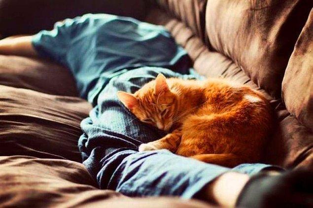 Bonus – Kırıp dökse de, yırtıp tırmalasa da yanınıza ilişip, kafasını koyup uyuduğunda, sıcaklığını hissettiğinizde… İşte her şeyi unutturan an.