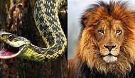 Тест: к какому классу животных вы относились в прошлой жизни?