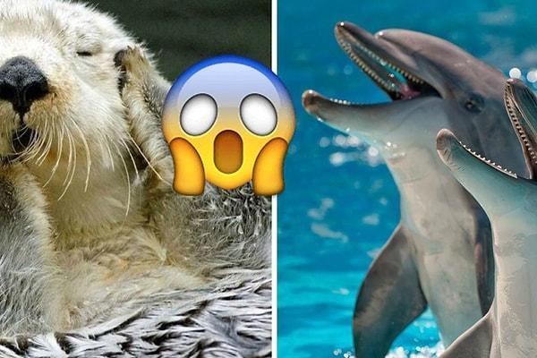 Выдры-некрофилы и дельфины-насильники: 10 отвратительных фактов о самых милых животных