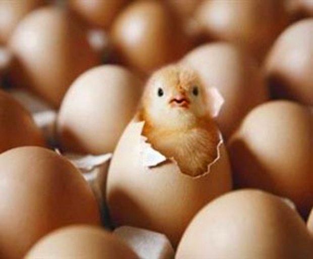 Tavuk yumurtadan.