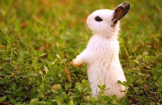 İlk deney tavşanlarda yapıldı