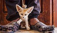 Фотопроект о незаконной торговле животным не оставит вас равнодушными!
