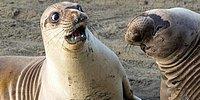 Не надорвите живот: 20 финалистов премии за лучшую комедийную фотографию дикой природы