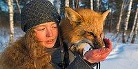 А вы знали, что домашних лисиц вывели у нас в России? 😲
