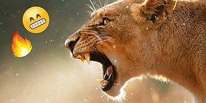 Тест: Какое хищное животное ваше подсознание?