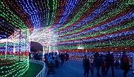 """""""Белые ночи"""" в Америке или 6 самых впечатляющих праздничных освещений"""