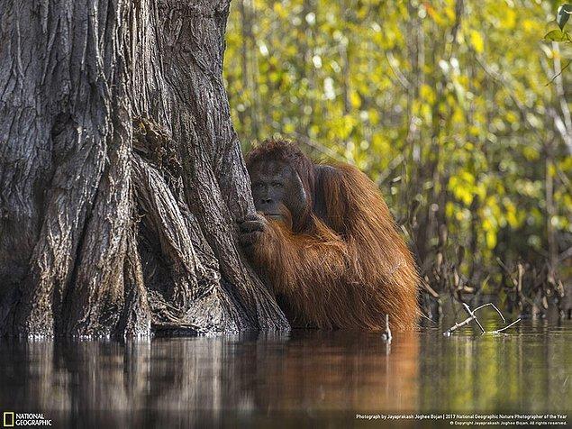 1. Büyük Ödül: Borneo'da Bir Nehirde Yüz Yüze - Jayaprakash Joghee Bojan