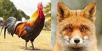 Тест: Какое у вас было бы тотемное животное, если бы вы родились в Древней Руси?