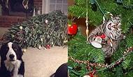 17 доказательств того, что кошек и собак запрещено оставлять в комнате с елками