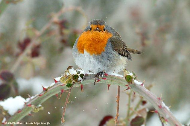 21'indeyken Türkiye'nin 79 iline doğadaki yaban hayatı ve kuş araştırmaları için gitmiş.