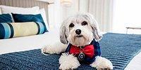 Люксовый отель для собак в Сан-Франциско полон развлечений, а заведует им песик по имени Бастер!
