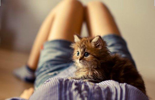 11. Bir kedinin karnınıza yatmasına izin verin.