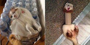 И смех, и грех! 18 уморительных фотографий животных, попавших впросак