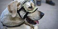 10 невероятных историй о настоящем героизме собак, которые заставят вас любить их еще больше!