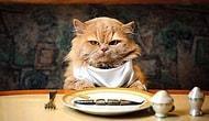 Правда или ложь? Почти никто не может набрать 11/11 в этом тесте на знание фактов о еде!