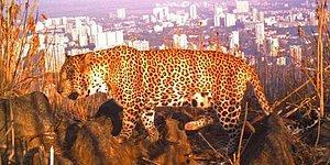 10 мест на Земле, где опасные животные живут бок о бок с человеком