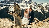 Эти животные совершенно случайно стали звездами свадебных фотографий, затмив собой жениха и невесту! 😍