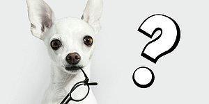 Лишь 1% читателей удается угадать породы всех 9 собак по их лапам. А вы в их числе?