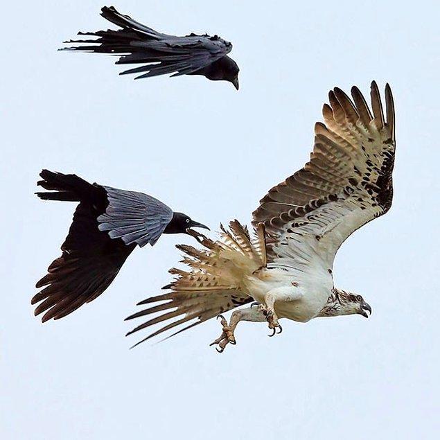 34. Demek kartallar yalnız, kargalar sürüyle uçar ha, sen mi uydurdun lan bu lafı?