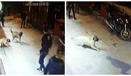 Kemerle Dövüp Bıçakladılar! Sokakta Yaşayan Muhammet Ali'nin Köpeği 'Paşa' ve Yavrusuna Vahşi Saldırı