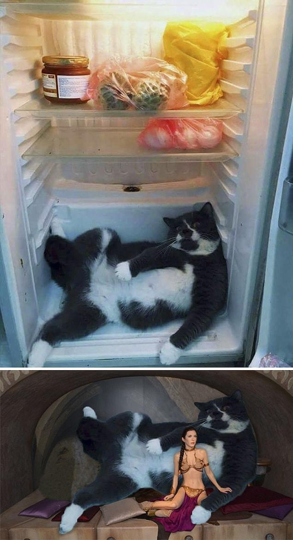 фоне голубого пустой холодильник демотиваторы насекомые