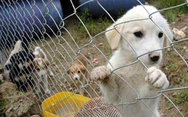 Bilinçsiz hayvan satın alma, bir süre sonra terk etme konusu zaten çok uzun yıllardır tartışılıyor.