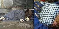 Очень нетрадиционная медицина: ветеринары вылечили обожженные лапы медведей рыбьей кожей!