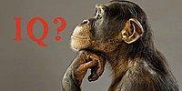 Этот суровый тест на знание мира животных покажет, выше ли ваш IQ, чем у шимпанзе