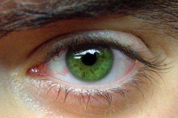 Orman Yeşili