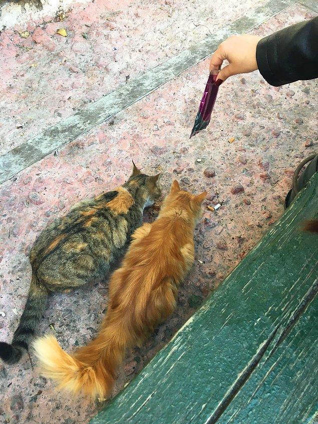Sokak hayvanları hakkındaki birçok ön yargının temelini, aç olmaları sebebiyle gösterdikleri davranışlar oluşturur.