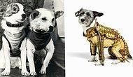Мода от Белки и Стрелки: Что носили первые собаки в космосе?