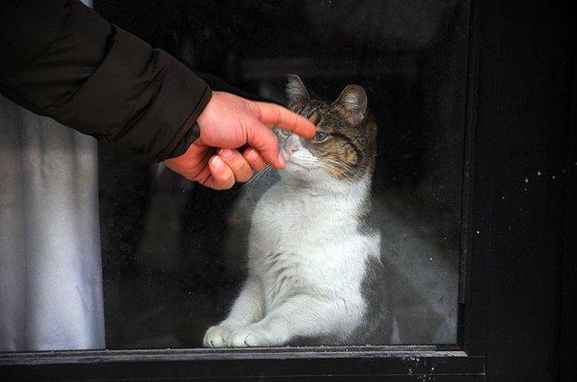 Sosyal medyadan kedinin 20 gün oradan çıkartılmamasına tepkiler geldi 📌