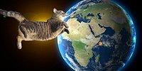 Всегда ли котики правили миром? Отнюдь нет! Доказательства перед вами