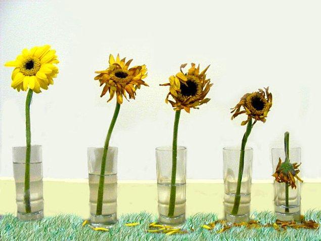 Solmuş çiçekleri vazodan ayırın.