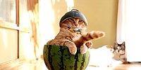 Без кота и жизнь не та! Самые свежие видео с котишками, которых вы еще точно не видели!