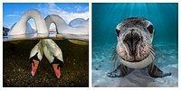 Объявлены победители конкурса на лучшего подводного фотографа 2018 года!