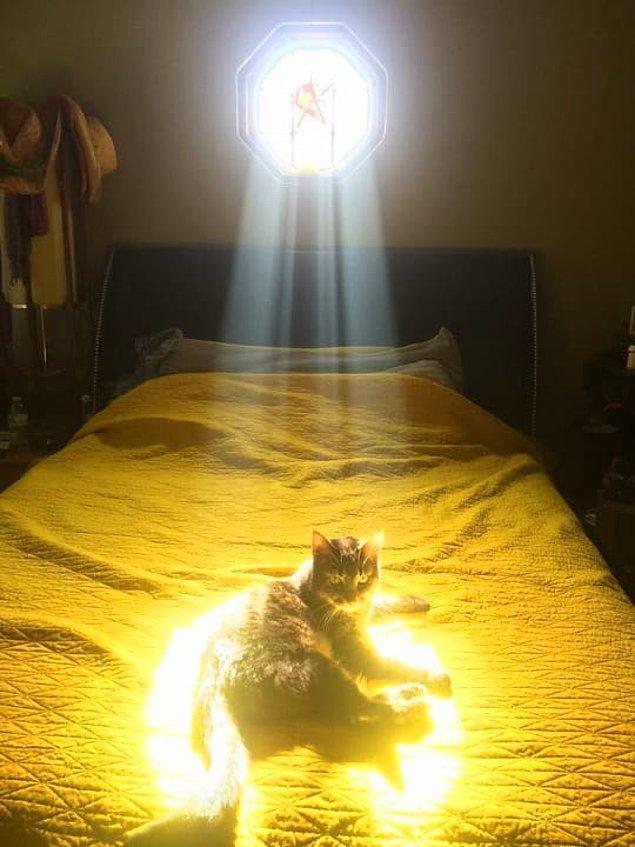 Bu kedide ise farklı bir şeyler var. Ana görev bile olabilir.
