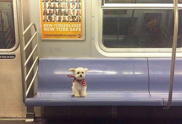 16. Tanımadığım bir şehirde toplu taşıma kullanırken